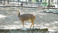 Get A Lovely Atmosphere In Mumbai Zoo