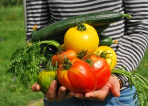 The Best Ways To Create Your Own Vegetable Garden